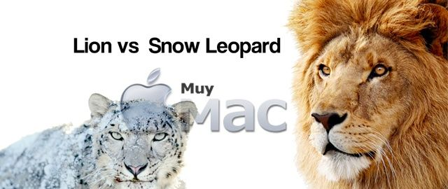 lion_vs_snow_leopard