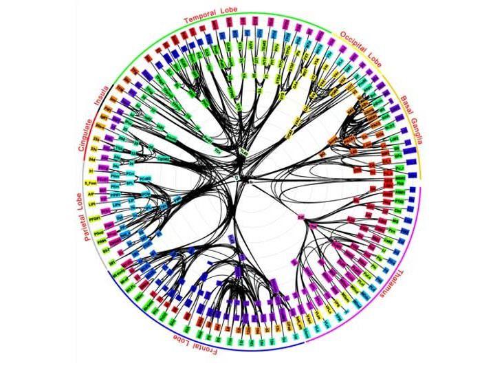 Primeros chips de IBM modelados según el cerebro humano