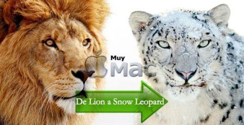 de-lion-a-snow-leopard