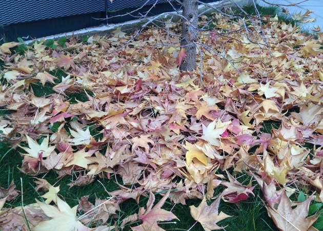 Fotografía tomada con iPhone 4S