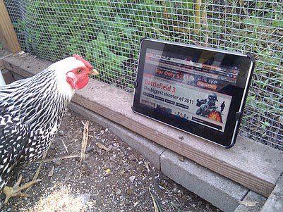 Animales vs tablets y smartphones (HUMOR)