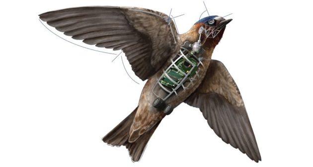 drones-pajaro