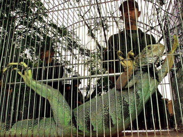 miembro de Lizard Squad