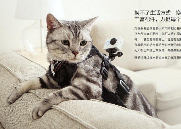 Gato equipado con la Action Yi Camera de Xiaomi