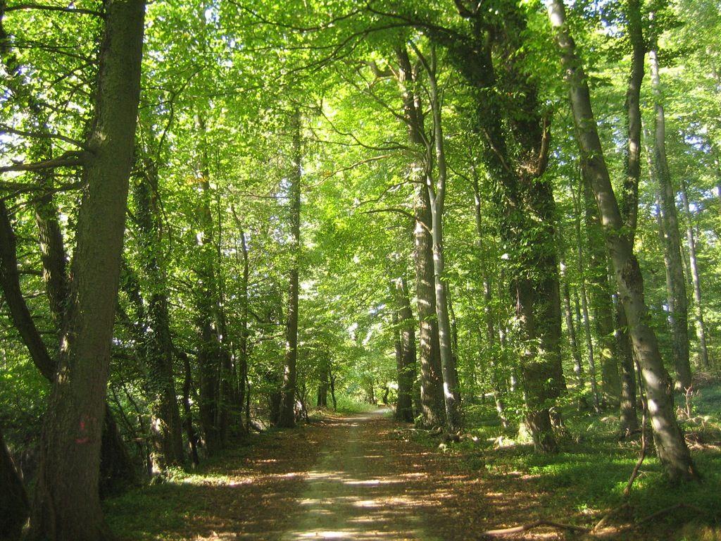 Apple se compra un bosque os contamos para qu - Casitas en el bosque ...