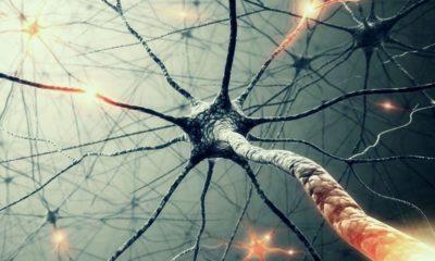 Primer prototipo de neurona artificial funcional 30