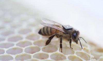 Chips de Intel ayudarán contra las muertes de las colonias de abejas
