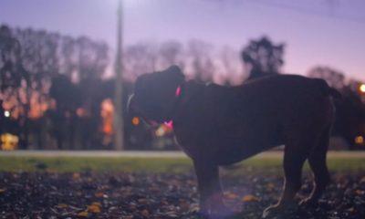 Collar inteligente para perros permite seguir su localización y su dieta