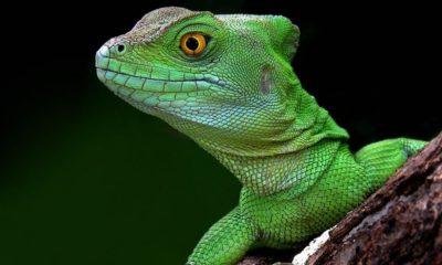 Seis adolescentes británicos detenidos por usar una herramienta de Lizard Squad