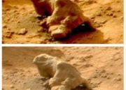 Cosas raras que hemos visto en Marte con los años 34