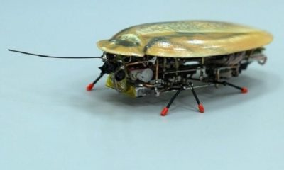 El robot más pequeño del mundo parece una cucaracha 36