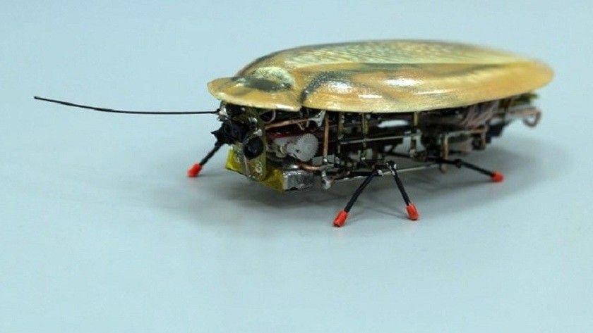 El robot más pequeño del mundo parece una cucaracha