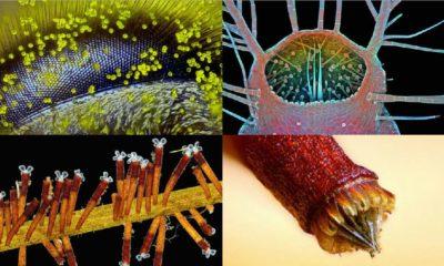 2015 Photomicrography Competition: el increible mundo de lo pequeño 28