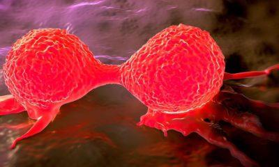 Algas modificadas genéticamente para luchar contra el cáncer 28