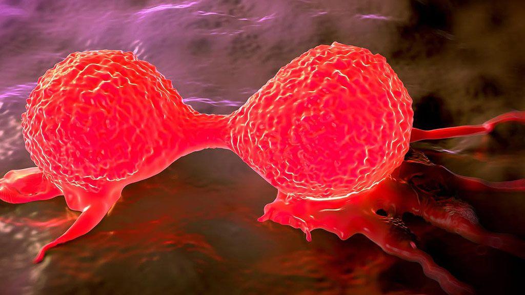 Algas modificadas genéticamente para luchar contra el cáncer 27