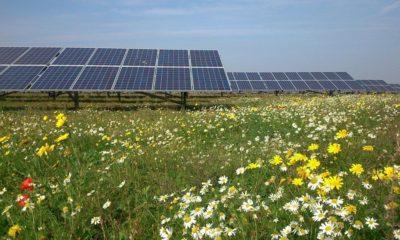 Pueblo rechaza granja solar por si consume todo el Sol 66