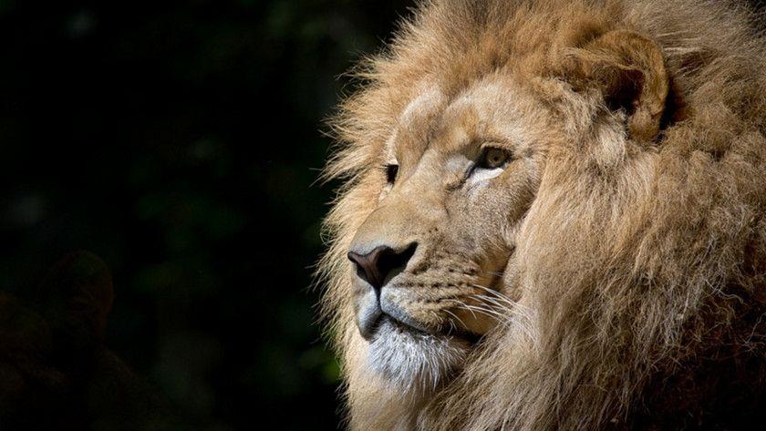 Brave, el navegador del ex-CEO de Mozilla ya está disponible 32