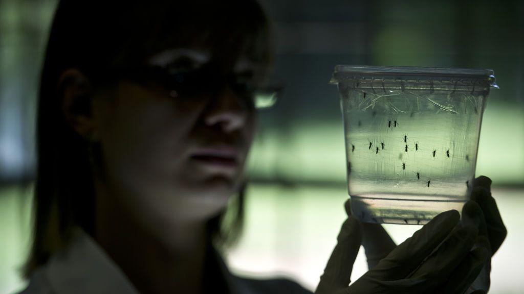 Virus Zika, un peligro real que causa daño cerebral 31