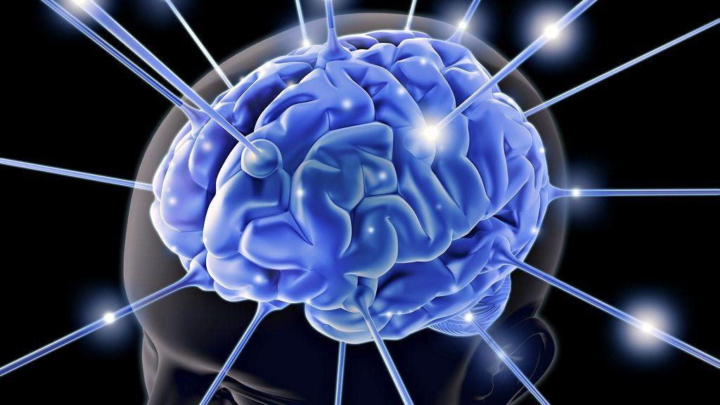 Entender mejor el cerebro, clave para la inteligencia artificial 28
