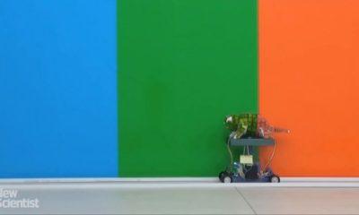 Este robot camaleón cambia de color casi al instante 29