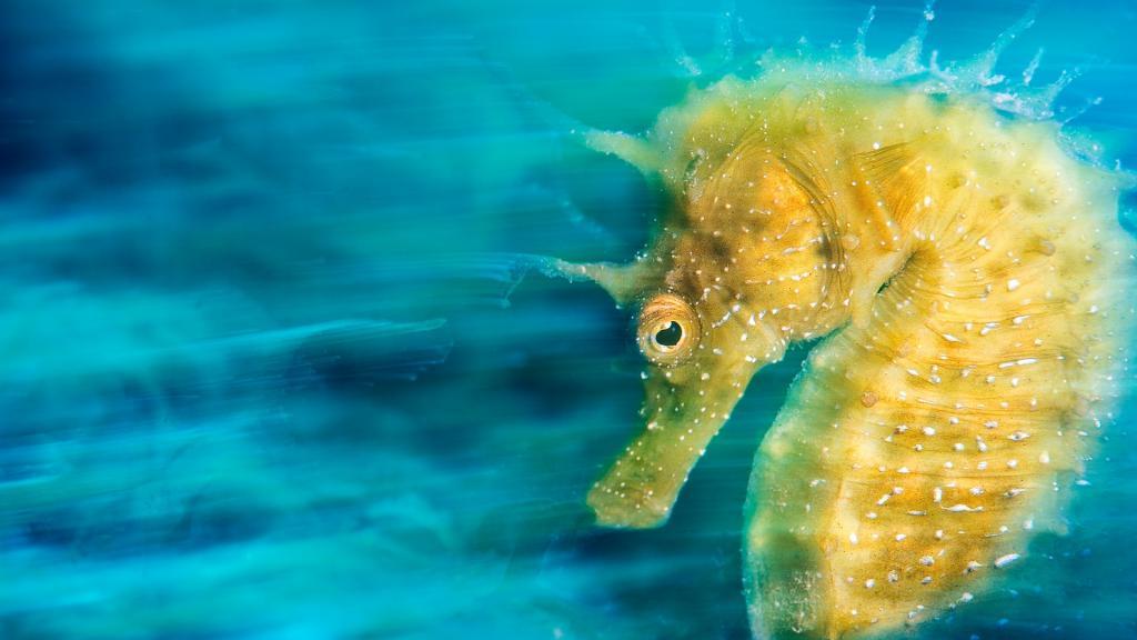 fotografía subacuática