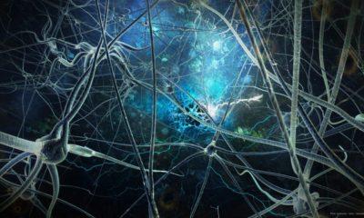 Identifican las neuronas que ayudan a procesar emociones 92