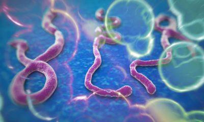 """IBM desarrolla una """"bala mágica"""" contra infecciones víricas 68"""