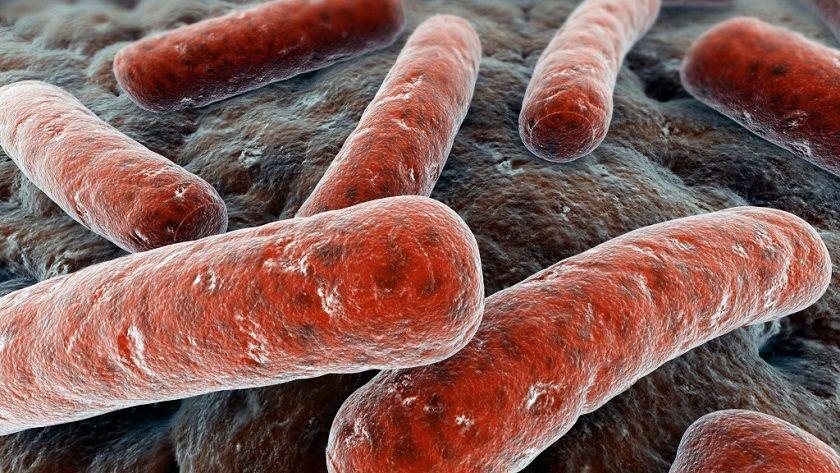 Encuentran bacteria resistente a los antibióticos críticos 36