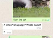 WhatsApp permite ahora citar mensajes 38