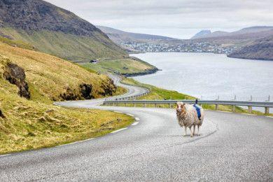 Islas Feroe mapeará su territorio con ovejas con cámara
