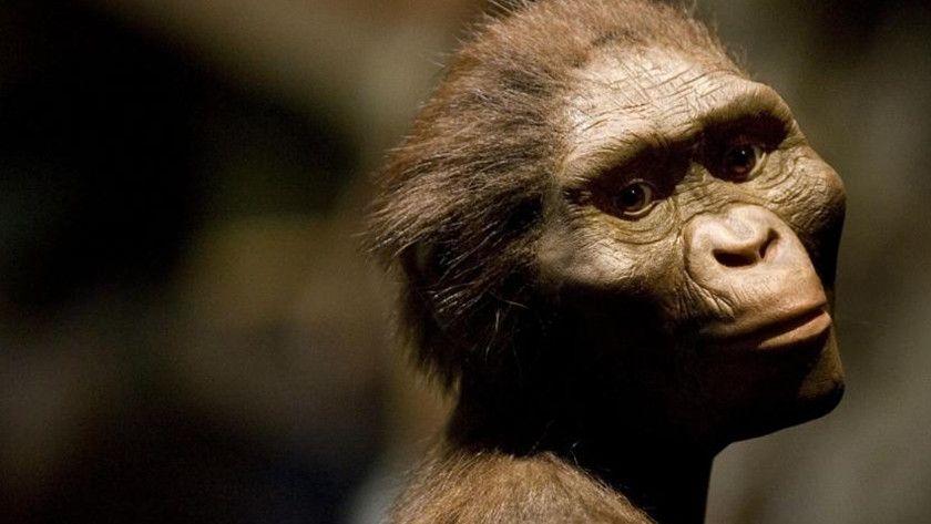 Desvelan el misterio de nuestra abuela Lucy, tres millones de años después
