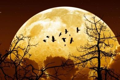 Superluna para el 14 de noviembre, la más cercana en 68 años