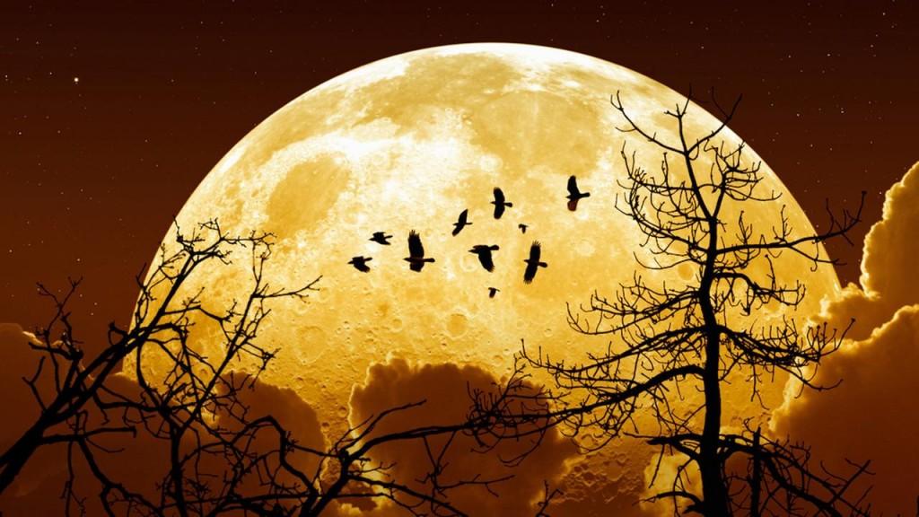 Superluna para el 14 de noviembre, la más cercana en 68 años 30