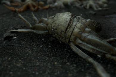 Nuevo tráiler de Death Stranding, el próximo juego de Hideo Kojima