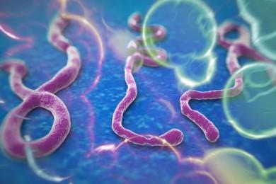Crean una nueva vacuna eficaz contra el virus del Ébola