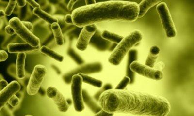 Registrado un nuevo caso de superbacterias y antibióticos que fallan 30