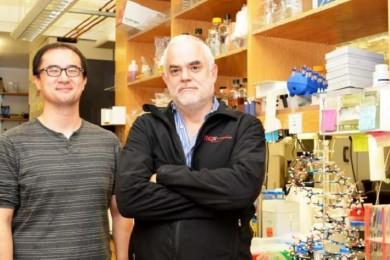 Científicos crean el primer organismo vivo semisintético totalmente estable