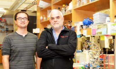 Científicos crean el primer organismo vivo semisintético totalmente estable 57