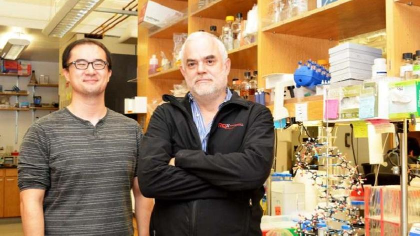 Científicos crean el primer organismo vivo semisintético totalmente estable 32