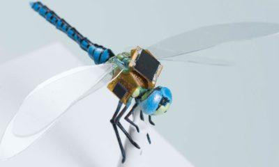 """Libélulas con implantes cibernéticos, los primeros """"drones vivientes"""" 97"""