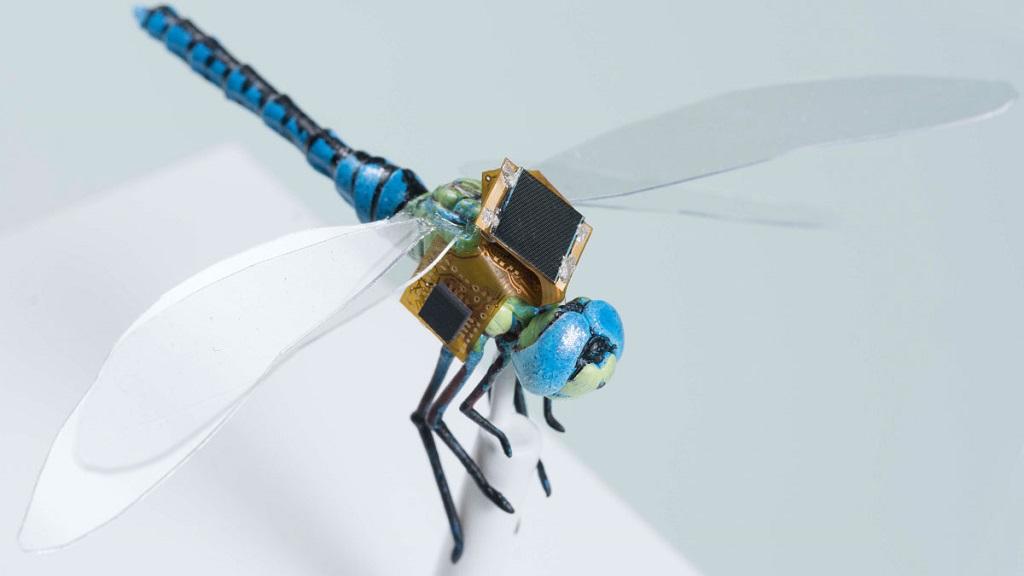 """Libélulas con implantes cibernéticos, los primeros """"drones vivientes"""" 30"""