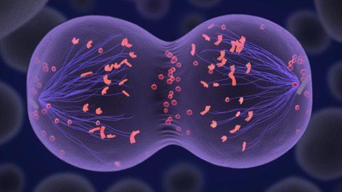 Más de 30 horas de división celular compactadas en 23 segundos