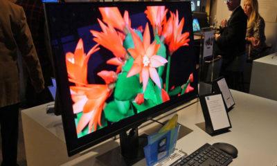 monitor OLED 4K