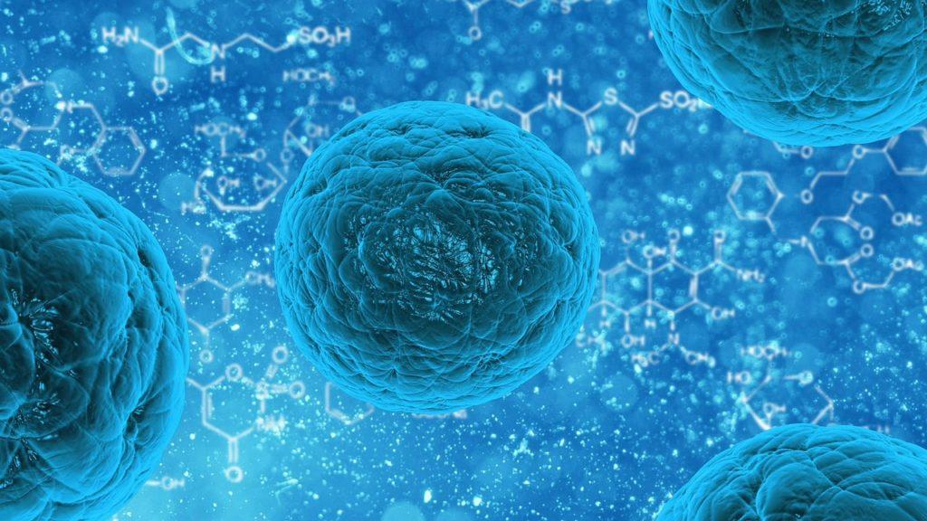 Células madre reprogramadas, un avance muy importante 29