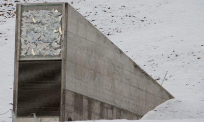 El Banco Mundial de Semillas de Svalbard se ha inundado 35