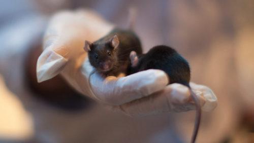 Conservan esperma en el espacio: podremos mantener las especies fuera de la Tierra