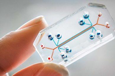 Se experimentará con órganos en chip en la Estación Espacial Internacional