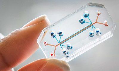 Se experimentará con órganos en chip en la Estación Espacial Internacional 53