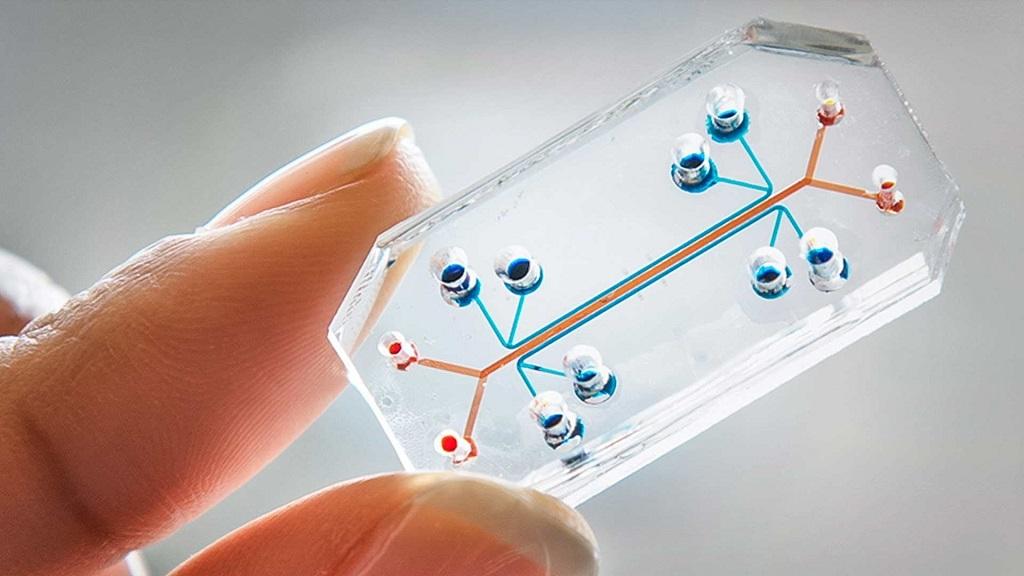 Se experimentará con órganos en chip en la Estación Espacial Internacional 30