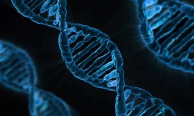 Almacenan una película en el ADN de bacterias vivas 45